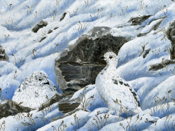 Ptarmigan by Sue Swapp