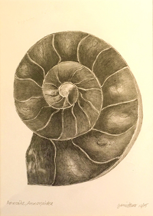 Ammonite by Janis Trowbridge-Howes $125