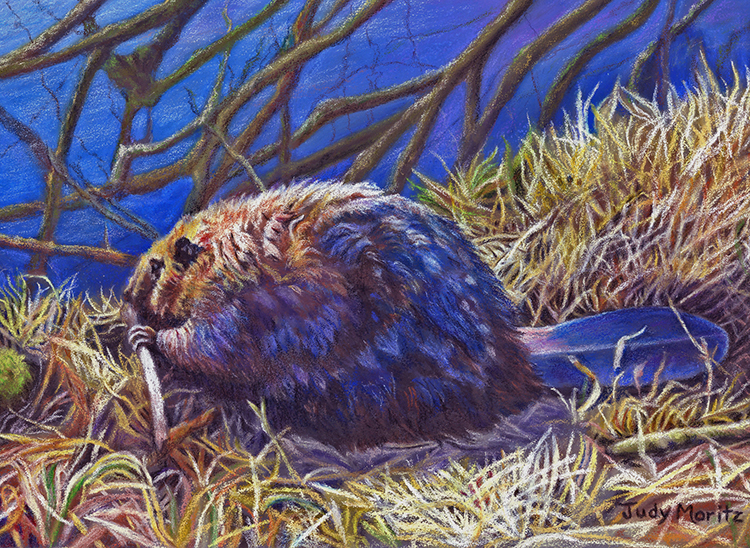 Beaver on the Slough by Judy Moritz $150