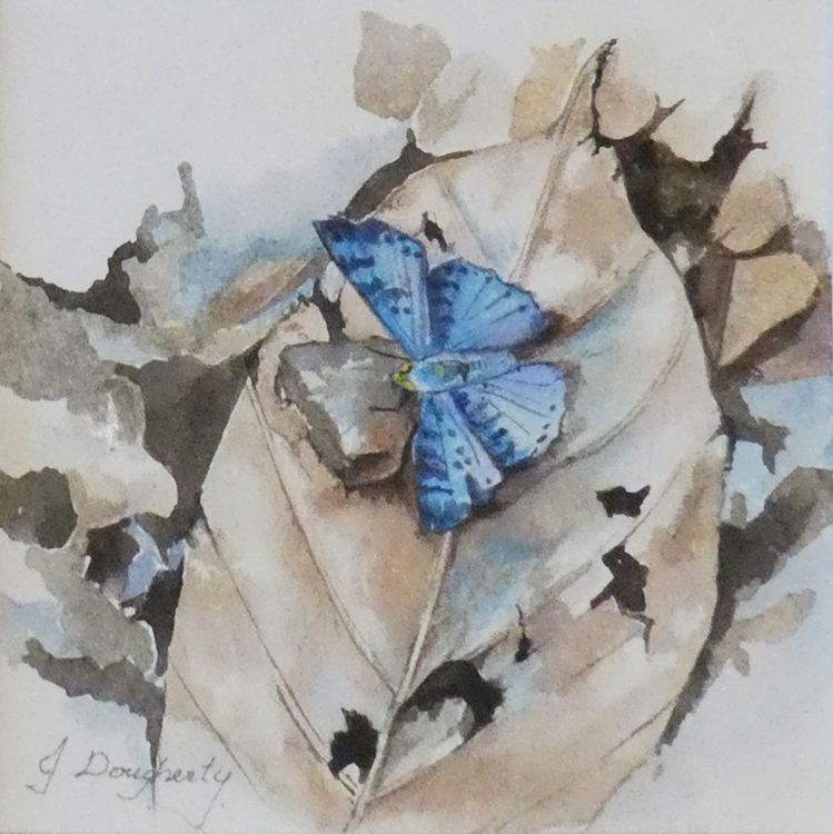Blue Butterfly by Judy Dougherty $135