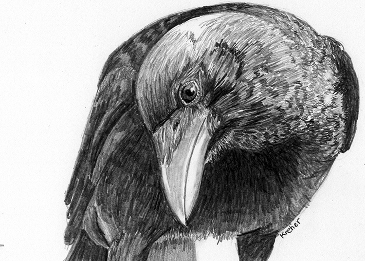 Curious Raven 1 by Leslie Kreher $200
