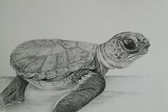 Baby Turtle by Leslie Kreher $100