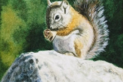 Chipmunk 2 by Judy Sullivan $160