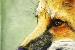 Red Fox Close Up by Sally Abbey $225