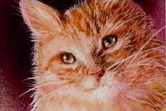 Softly Purring V by Beverly Fotheringham $125