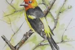 Tanager by Judy Dougherty $125