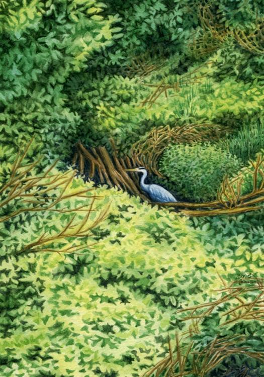 Hidden Creek by Bonnie Johnson