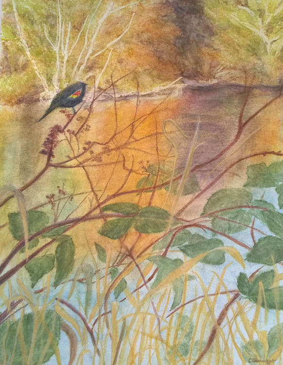 Red-winged Blackbird by Cynthia Tamayao