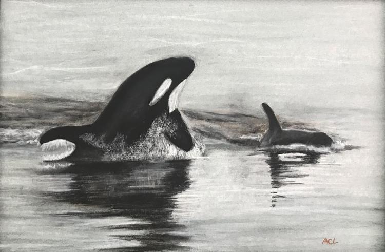 Salish Sea Orcas by Anna Choi Lee