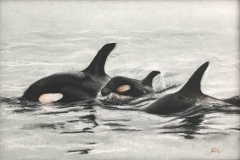 Baby Orca by Anna Choi Lee