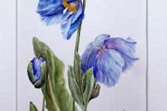 Himalayan Blue by Kathryn Tewson