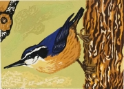 WEB _Redbreasted Nuthatch_ Phil Carrico $395