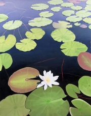 Web 111. Lily Pads -- April 2018