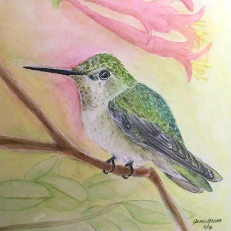 Anna's Hummingbird, Calypte Anna by Janis Trowbridge-Howes $180