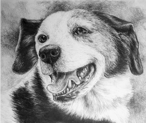 Buddy 1 by Kristen Wickersham $150