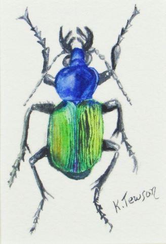 Ceroglossus Chilensis by Kathryn Tewson $145