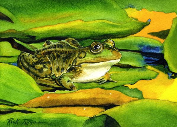 Frog and Lily Pads by Rick Tuthill $200