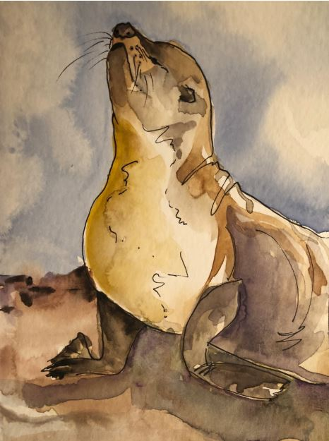 Galapagos Sea Lion by Chris Archer $110