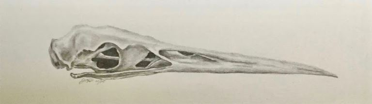 Great Blue Heron Skull by Janis Trowbridge-Howes $150 Sold
