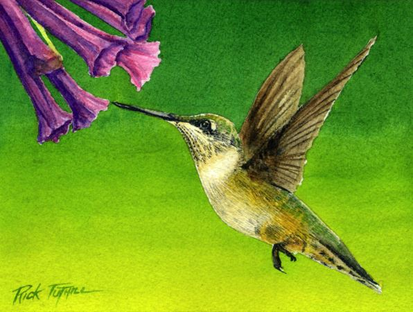 Hummingbird and Flowers by Rick Tuthill $200