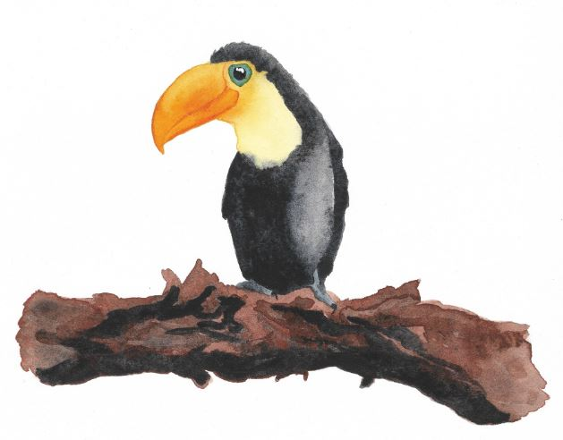 Toco by Sarah Crumb $150