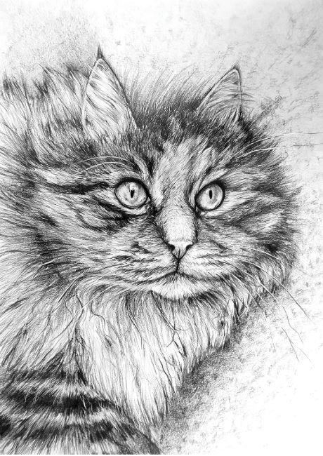 Zelda the Cat by Kristen Wickersham $200