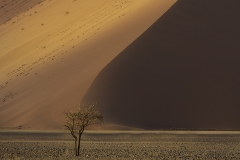 WEB Namibia Photography Sossusvlei Towering Dune The Tree by Mike Reid