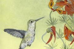 WEB Anna at Parrot's Beak Flower by Susan Swapp