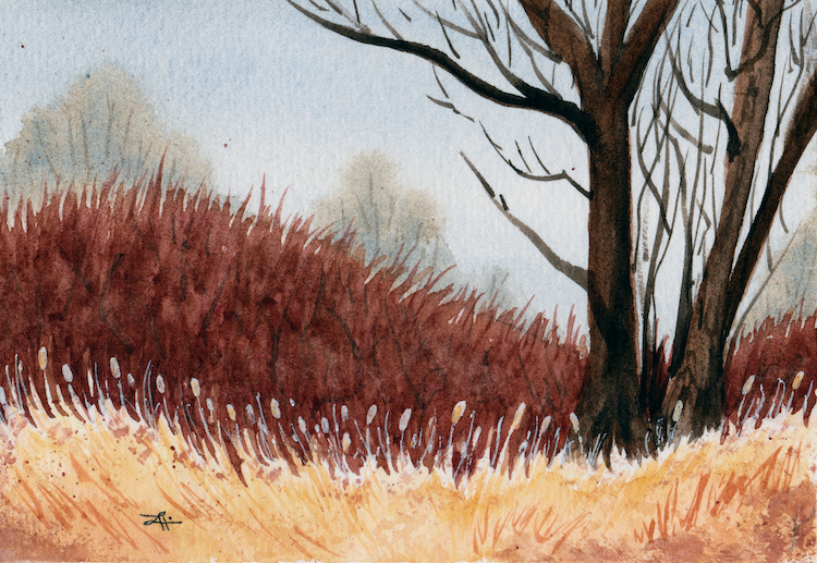 Winter Cattails by Alison Lilly $100