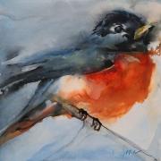 WEB American Robin by Jani Freeman $250