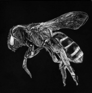 WEB Bee Nice! by Rick Tuthill $300