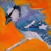 WEB Blue Jay by Jani Freeman $250