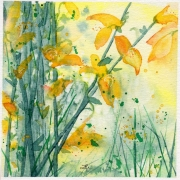 WEB Broom Blossoms by Alison Lilly $100