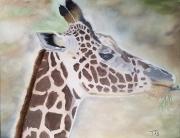 WEB Giraffe by Tom Schumacher $154