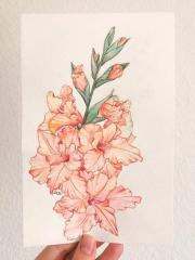 WEB Gladiolus by Amanda Ahmill $172jpg