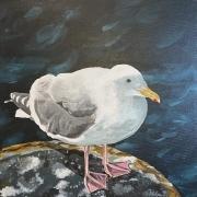WEB Glaucous-Winged Gull at Edmonds Ferry Landing by Paula Perez $350