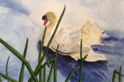 WEB Graceful Swan by Lynnea Mattson $145