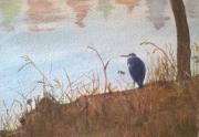 WEB Great Blue Heron, Green lake by Cynthia Tamayao $100