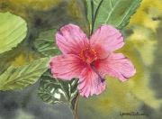 WEB Hybiscus by Lynnea Mattson $105