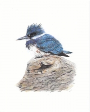 WEB Kingfisher by Jane Luedicke $275