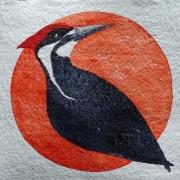 WEB Pileated Woodpecker by Sarah Crumb $250