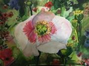 WEB Poppy by Elena Naskova $120