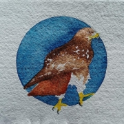 WEB Red-tailed Hawk by Sarah Crumb $250