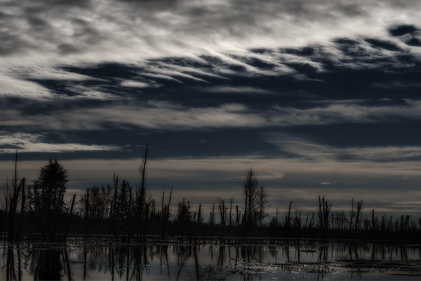 Night-Sky-Over-Marsh-by-Sam-Spenser-
