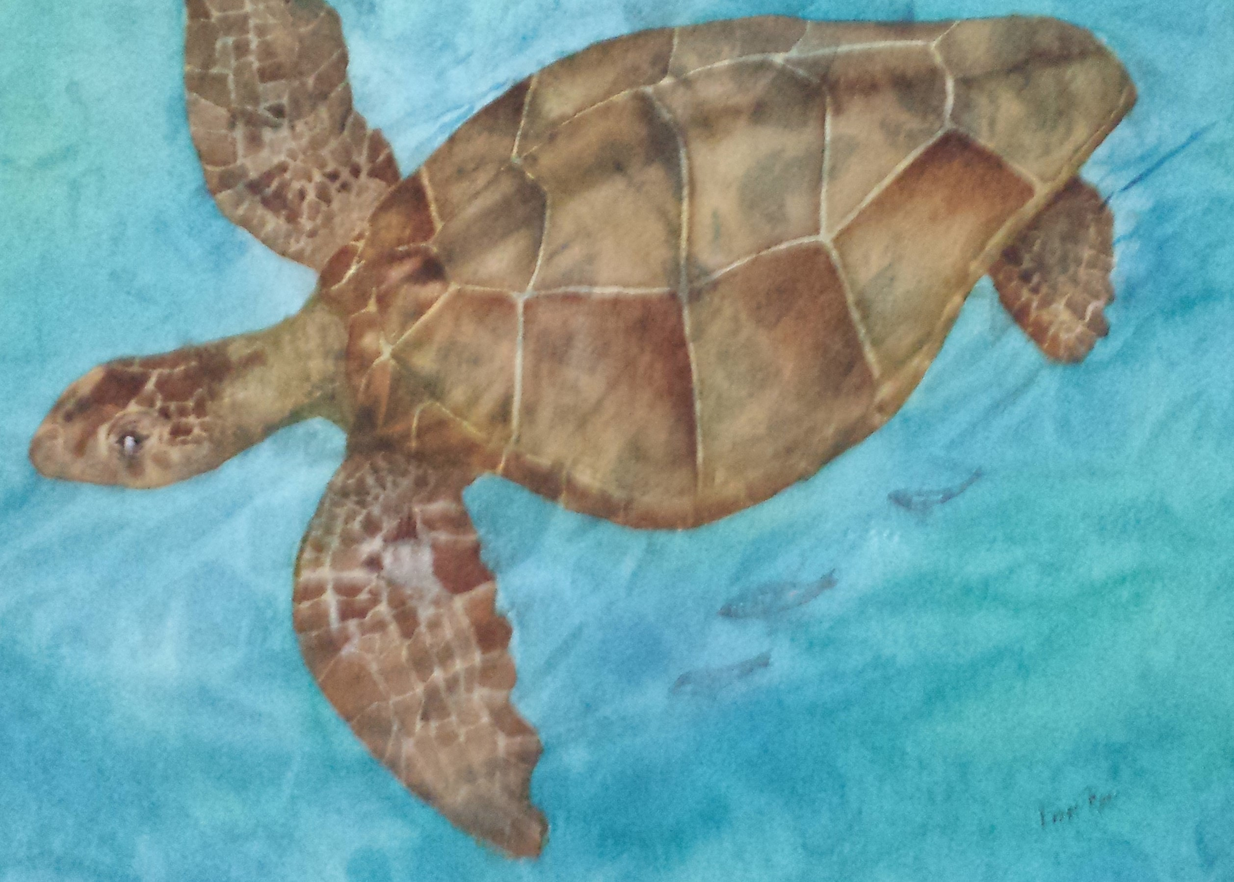 Sea-Turtle-by-Lonni-Flowers-325