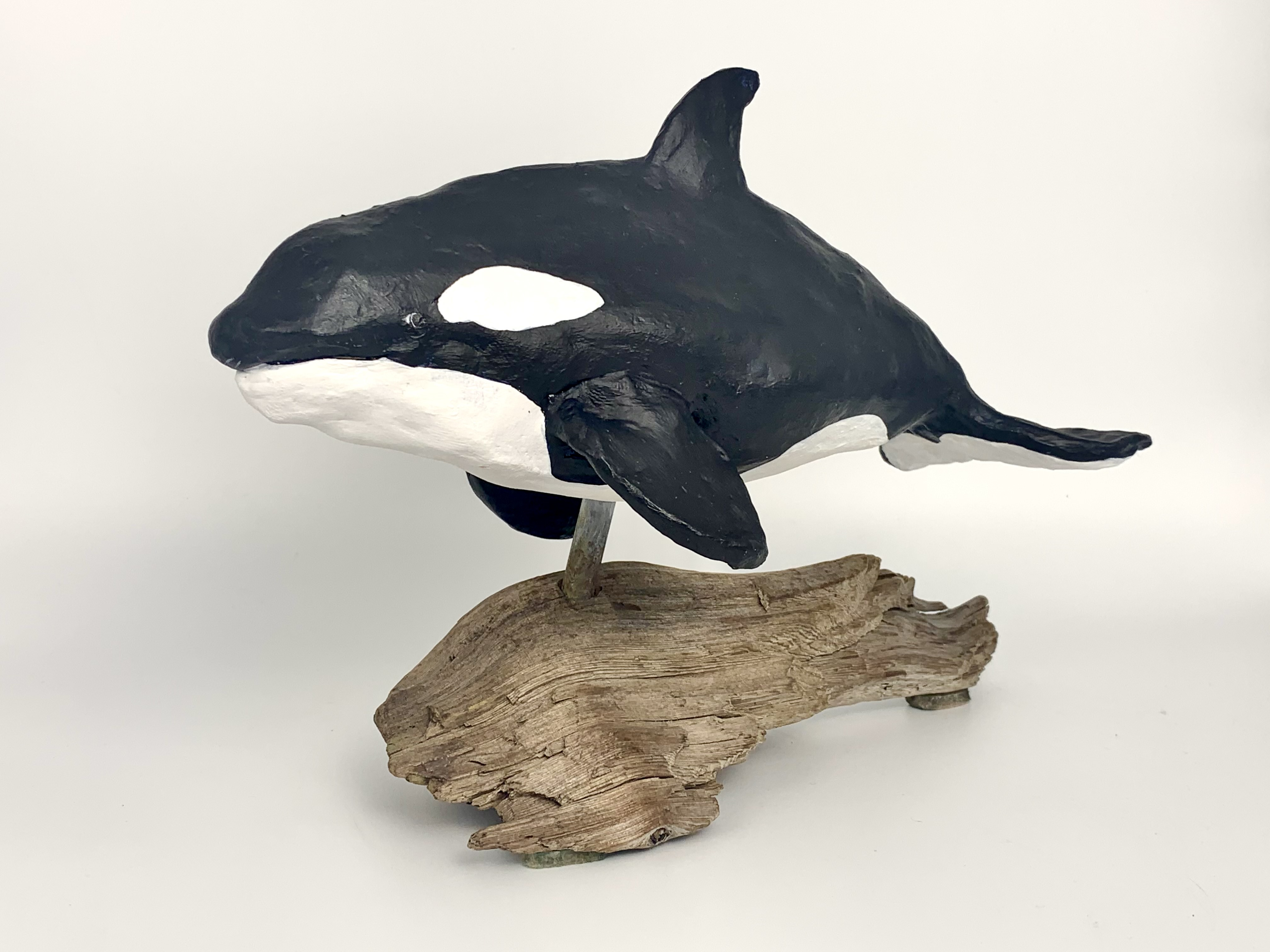 Orca-pic