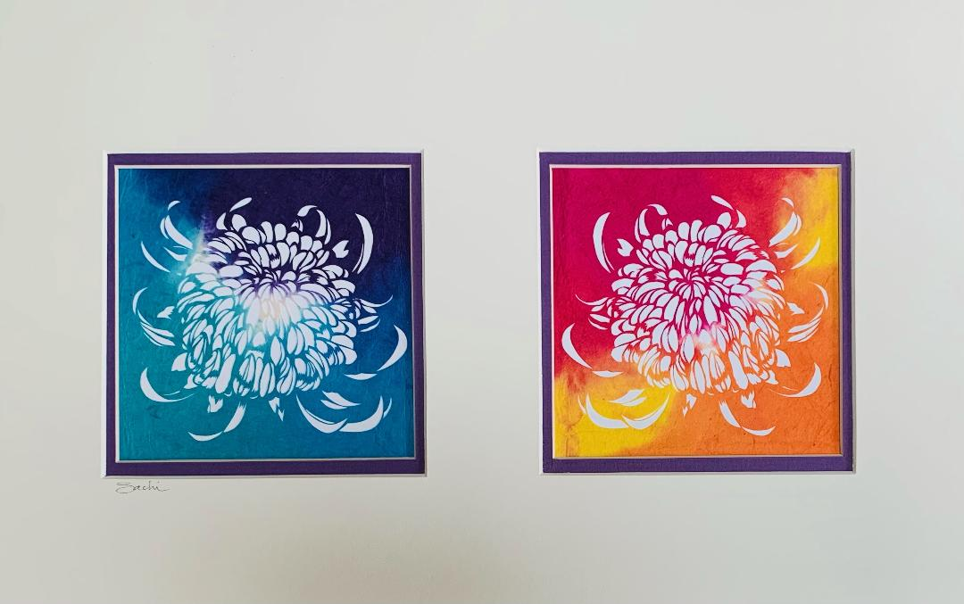 Chrysanthemum in Two Colors by Sachi Tanimoto